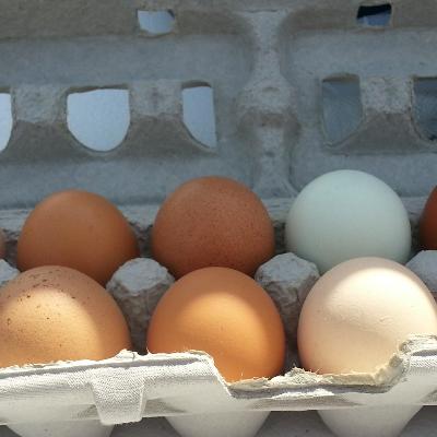 Large Eggs