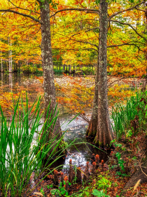 """""""Fall In The Bayou"""" Photographic Print"""